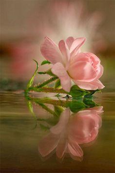 Beautiful Pinky..