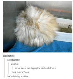 Why I love Tumblr