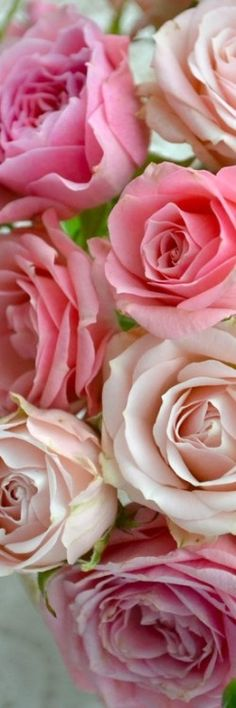 "Rose has often been described as ""the queen of flowers"", and for many skin-care specialists there is no finer essential oil than rose oil #harmoniabotanica #rose"
