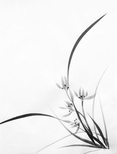 Sumi-e (Japanese ink painting) Orchid, by Valeria Viscardi Japanese Ink Painting, Sumi E Painting, Chinese Painting Flowers, Chinese Brush, Chinese Art, Watercolor Flowers, Watercolor Paintings, Tinta China, Japan Art