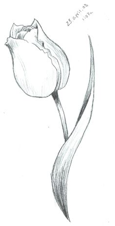 Tulip Sketch by ScarletRainxX on deviantART