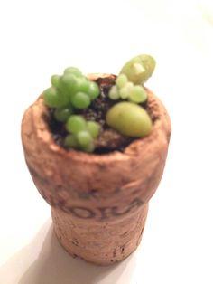 suculenta em uma rolha de vinho AURORA