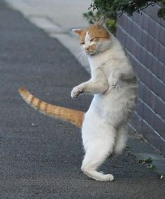 move to the left, lift that left paw and slide baby!!