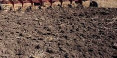 Knowing the pH and nutrient content of your soil is important to successful growing.