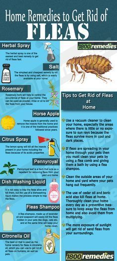 These home remedies for fleas will not only kill the fleas but will also prevent the fleas in your home in future.
