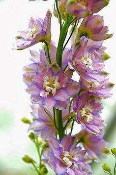 Flowersgardenlove