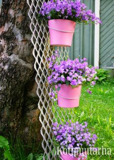 Kesäkukat ovat varmoja läpi kesän kukkijoita. Ruukkuja voi asetella myös puutarhaan. Kuvan ruukun on kiinnitetty puuhun nojaavaan ritilään. www.kotipuutarha.fi