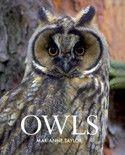 My Owl Barn: DIY: Felt Owls With Nest: dit is schattig, ik ga het zeker eens proberen....