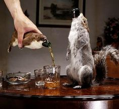 BrewDog's The End of History beer contains 55% of alcohol and each bottle is presented in a stuffed stoat (£500) or grey squirrel (£700).Unique packaging was created by a taxidermist and all the animals used were road kill.