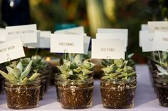 mini succulent escort card display