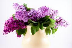 Lustrous Lilacs  8x12 Fine Art Print by LaurenBPhotography on Etsy, $22.00
