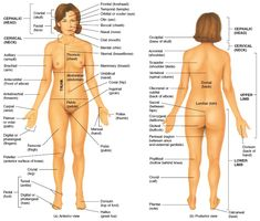 Anatomical Position: -Standing upright -Facing observer -Eyes forward -Feet flat on floor -Arms at the side -PALMS FACING FORWARD I know it seems silly, but these are the basic guidelines to use as a...