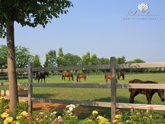 Copyright © www.vivaiodelgarda.it  Il Giardino delle Passioni - Maneggio & Horses