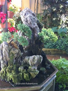 Bonsai inside the Botanic Garden.