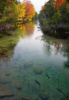 Crystal River, Glen Arbor, MI I go kayaking every year on this river. It's a tradition for our family.