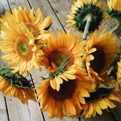 flowers, sunflower, and yellow image Plants Are Friends, Mellow Yellow, Color Yellow, Yellow Sun, Van Gogh, Beautiful Flowers, Happy Flowers, Simple Flowers, Beautiful Things