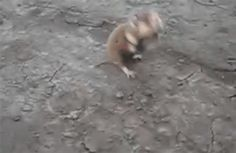 They Spotted a Tiny Wild Russian Hamster, but It Turns out It Wasn't so Cute - BlazePress