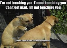 Attack Of The Funny Dogs - 28 Pics