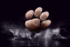 For my Clemson friends Clemson Tigers, Clemson Tiger Paw, Clemson Football, College Football, Death Valley Clemson, Tigers Live, Snow Night, Tiger Pictures, Cincinnati Bearcats