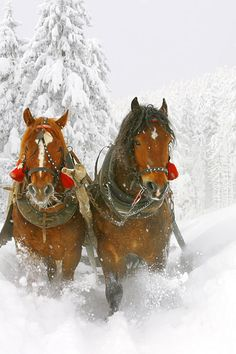 sleigh bells This has been on my bucket list for years.not many places nearby that offer this sleigh ride, but someday I will do this before I leave this earth.Oh What Fun It Is To Ride In a 2 Horse Open Sleigh. Winter Szenen, I Love Winter, Winter Wonder, Winter Horse, Winter Magic, Merry Christmas To All, Winter Christmas, Christmas Horses, Country Christmas