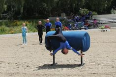 vaulting horse - Google Search