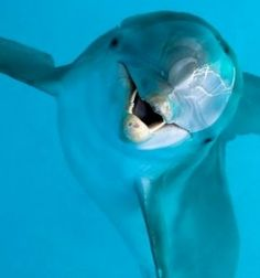 The Dolphin Movie - Dolphin Tale