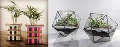 Transformando energías con elementos vivos en casa - Decohunter
