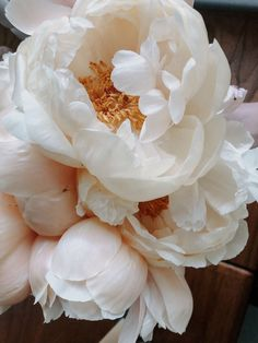 Macro Flower, Flower Art, Peony Flower, White Flowers, Beautiful Flowers, Planting Flowers, Floral Arrangements, Orchids, Wedding Flowers
