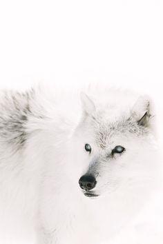 luxuryera:  Winter is Coming.Photographer:Ben McKinnon