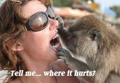 Dentist-monkey.