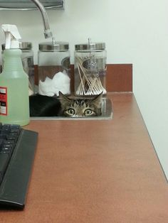 The vet can't see me. I am invisible here.