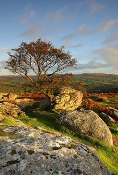 Dartmoor,  Devon, England, UK.