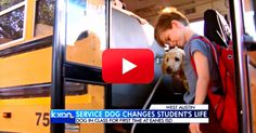 This Adorable Dog Is Helping One Boy On The Spectrum Curb His Meltdowns.