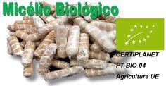Micelio_Biologico