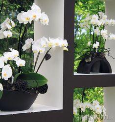 NA OČISTU VZDUCHU vkúpeľni, Glass Vase, Plants, Home Decor, Homemade Home Decor, Flora, Plant, Decoration Home, Planting, Interior Decorating