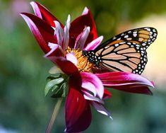 images of flowers and butterflies | Flowers-and-Butterfly-1-YKBWBDE574-1024x768.jpg