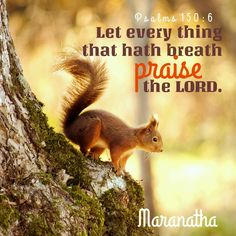 Psalms 150:1-6 (KJV)  Let every thing that hath breath praise the LORD. Praise ye the LORD.