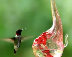 Our patented one piece drip-less design is easy to use and maintain. Each of our hummingbird feeders are hand blown using the most durable glass available.  For this model we begin with extra thick borosilicate(Pyrex) tubing,Then using pure silver and drops of clear glass we create the classic hobnail design. The flower and down stem are reinforced with ruby glass.  To fill your hummingbird feeder, pour nectar(sugar-water) through the trumpet shaped flower opening. This can be done while it…