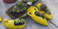 Netřesk, který je vědecky známý jako Sempervivum tectorum, je léčivá rostlina s původem v Evropě. Je to velmi odolná rostlina, které se… Low Light Succulents, Hoya Obovata, Kalanchoe Blossfeldiana, Jade Plants, Cactus Plants, Crassula Ovata, Indoor Planters, Indoor Cactus, Succulent Gardening