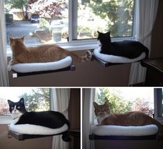 20 Of the Best Ideas for Diy Cat Window Perch . 10 Cool Hanging Cat Perch Ideas Tail and Fur Animal Projects, Diy Projects, Cat Window Perch, Window Sill, Diy Cat Bed, Cat Shelves, Window Shelves, Ikea Shelves, Cat Room