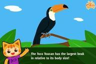 Fun Facts for #Kid #Education -  Toucan - Cikgu.tv e-learning for kids
