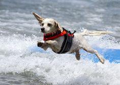 Dog launch