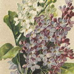 pictures of pretty antique garden postcards - Google Search