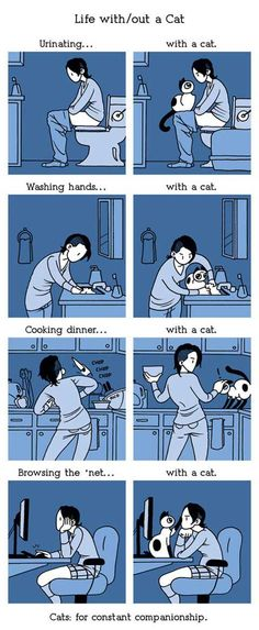 Life with a cat… totally accurate.