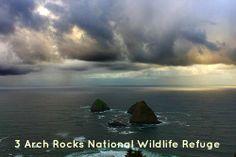 Oregon Coast Activities near Sandlake Country Inn - 3 Arch Rocks National Wildlife Refuge