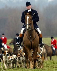 fox+hunting | Unenforceable': The fox-hunting ban is just one of many poorly ...