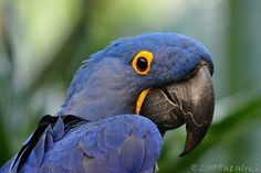 Birds -- SD Zoo Part 4 by Pat Ulrich, via Flickr