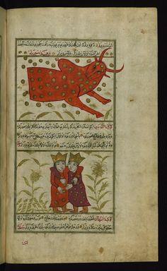 Title: Taurus and Gemini Form: Illustration Label: These illustrations depict Taurus (al-thawr) and Gemini (al-tawʾamān). Turkish version of ʿAjāʾib al-makhlūqāt (Wonders of creation) by Zakarīyā al-Qazwīnī (d. 692 AH / 1293 CE), made at the request of the Vizier Murtaza Paşa (Murtaḍá Pāshā) (fl. eleventh century AH / seventeenth CE). The codex was completed in 1121 AH / 1717 CE by Muḥammad ibn Muḥammad Shākir Rūzmah-ʾi Nāthānī.