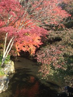 #kyoto #京都 #醍醐寺