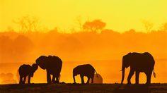 Wildlife thrives in Chobe National Park on the sub-Saharan floodplain.